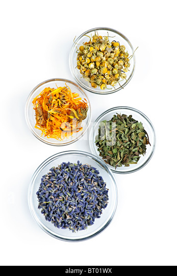 Bowls of dry medicinal herbs on white background from above - Stock Image