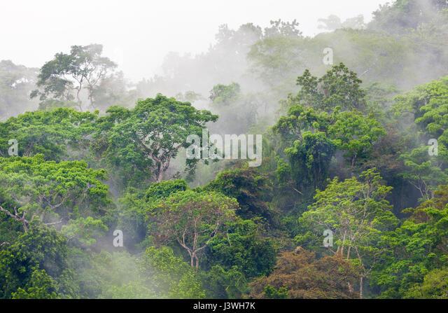 Misty rainforest after rainfall in Soberania national park, Republic of Panama. - Stock-Bilder