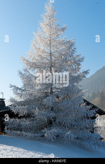 Megeve, Haute Savoie, France. 3rd December, 2016. 'Feels like' temperatures are around minus 4 degrees to - Stock Image
