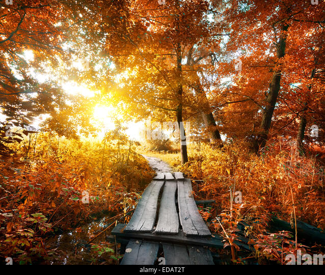 Bridge in the autumn forest with red leaves - Stock Image