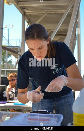 Anna Steel, a University of California - Davis graduate student working with the US Army Corps of Engineers Sacramento - Stock Image