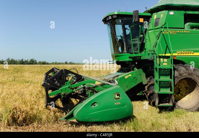 URUGUAY Bella Uniòn , 2100 hectar Farm near river Uruguay, rice harvest with John Deere combine harvester - Stock Image