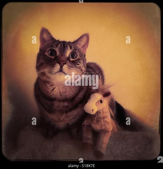 My cat posing with her pony - Stock-Bilder