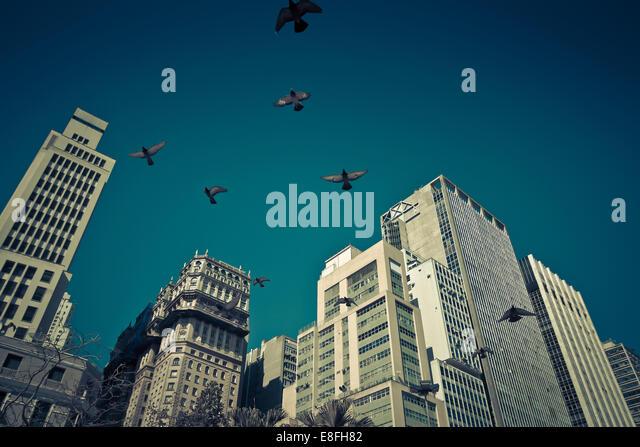 Birds flying over skyscrapers - Stock Image