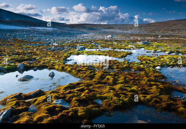 Green moss and water in Dovrefjell national park, Norway. - Stock-Bilder