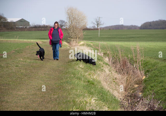 Women in the country and a red jacket walking two black Labradors - Stock Image