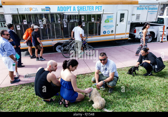 Mobile Dog Pound : Animal shelter dogs stock photos