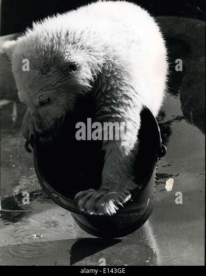 Mar. 31, 2012 - The Bear and the Bucket. Spitfire decides to try and get in, or is it on, the bucket, now there's - Stock Image