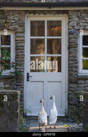 Two running ducks outside a farmhouse door - Stock Image
