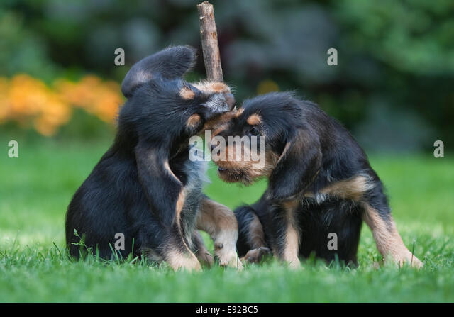 battle about a woodblock - Stock Image