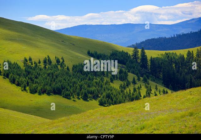 National Bison Range Wildlife Refuge Rolling prairie hillsides folded with scattered forest margins - Stock-Bilder