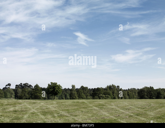 landscape image of a car park in a field, showing tire marks on grass, trees and a summer sky on a sunny day - Stock Image