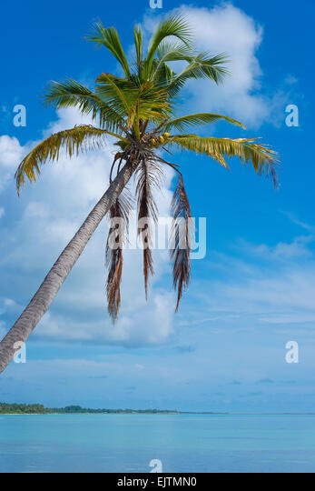 Palm Beach of Maradhoo, Gan, Addu Atoll, Seenu Atoll, Laccadive Sea, Maldives, Indian Ocean - Stock Image