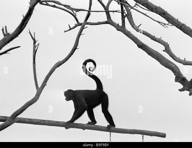 Monkey from the Legend Park - Stock Image