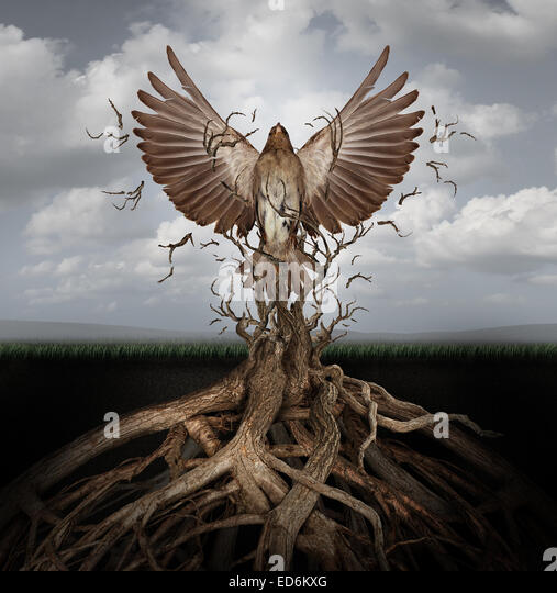 New life breaking free as a concept for freedom and power as the rise of the phoenix to be reborn and overcome challenges - Stock Image