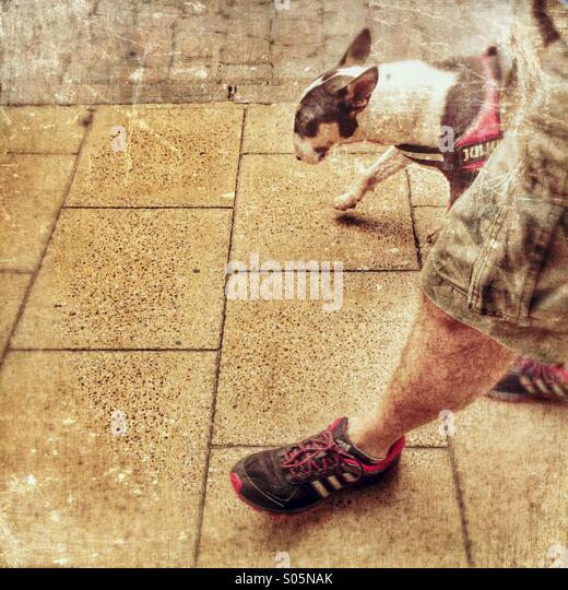 Dog walking - Stock Image