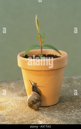 Snail on flowerpot - Stock Image