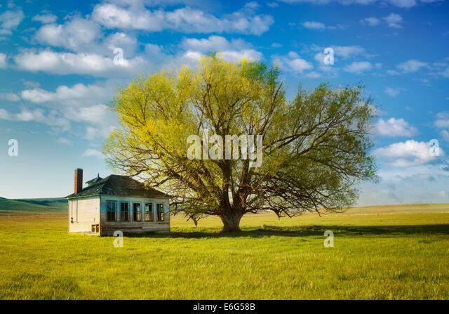 Pioneer Schoolhouse and lone tree in pasture. Near Jordan Valley. Eastern Oregon - Stock Image