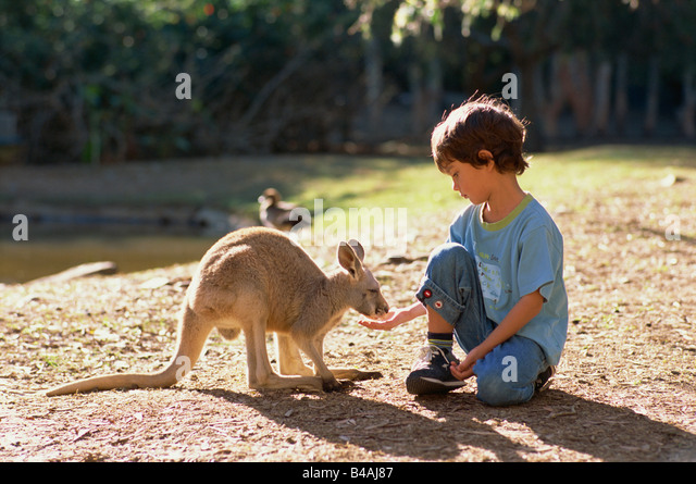 Currumbin Sanctuary, Boy And Kangaroo - Stock Image
