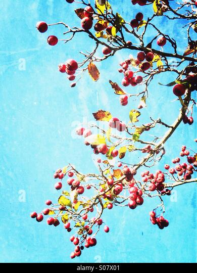 Winter wild berries - Stock-Bilder