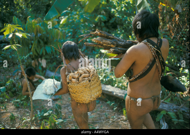 Slash and burn agriculture Indian woman and daughter  with firewood sweet potatoes cotton Venezuela - Stock Image