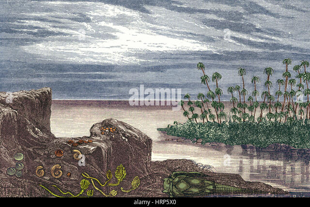 Devonian Period - Stock Image