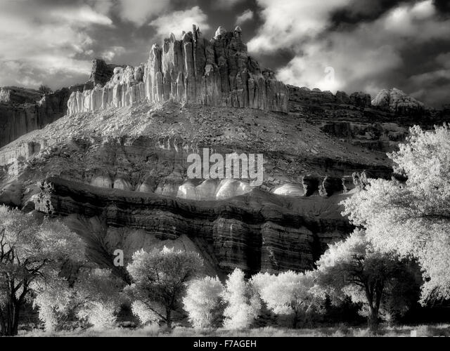 The Castle with cottonwood trees with new spring growth. Fruita, Capitol Reef National Park, Utah - Stock-Bilder