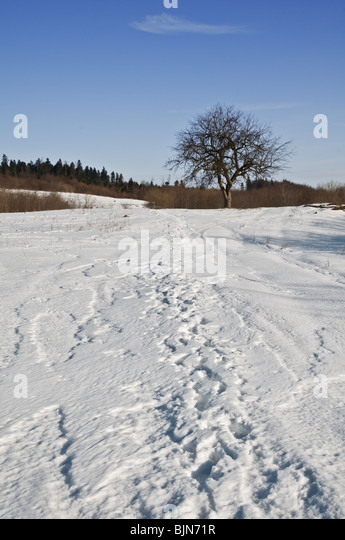 alone tree on winter field - Stock Image