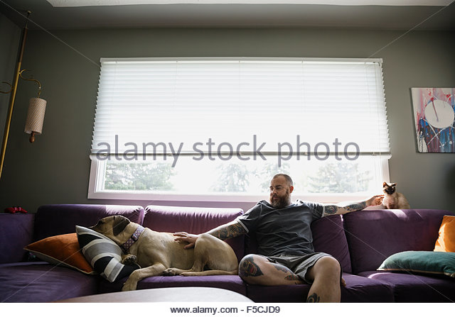 Man on sofa petting dog and cat - Stock Image