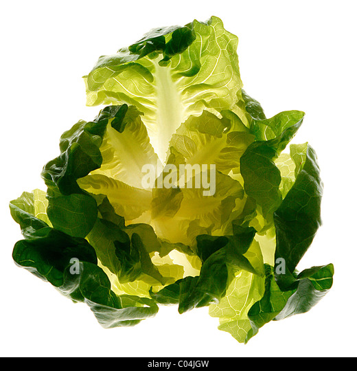 Fresh and green lettuce on white background - Stock-Bilder