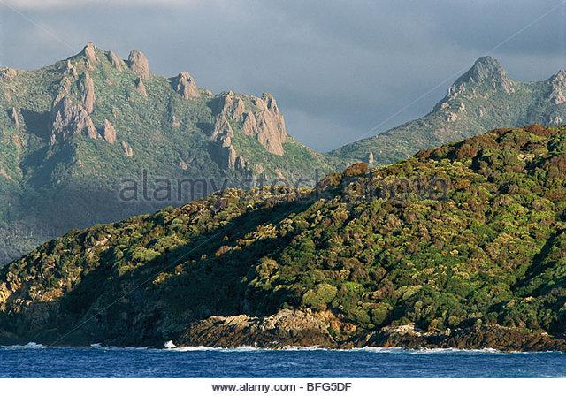 Rata forest, Codfish Island, New Zealand - Stock Image