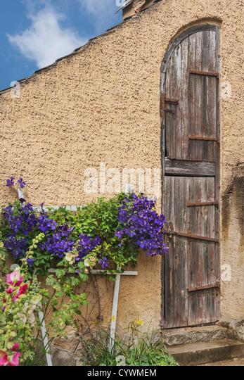 Alter Schuppen, davor blühen Clematis   Old hovel, clematis blooming in front. - Stock-Bilder