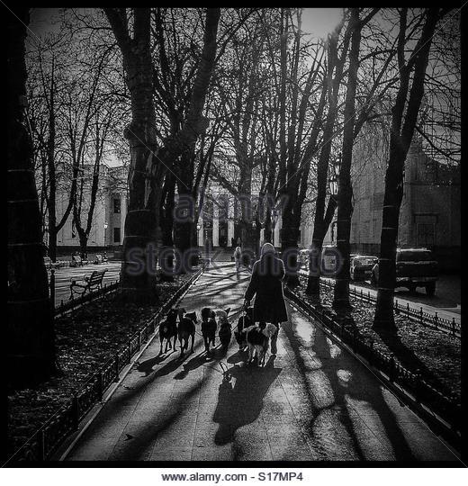 Dog walker, Odessa - Stock-Bilder