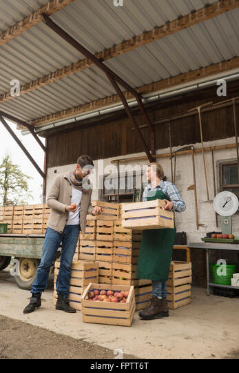 Wholesale purchaser buying apples in organic farm, Bavaria, Germany - Stock Image