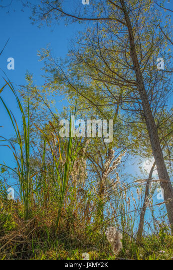 Various deciduous trees and forest vegetation shot at a very low angle looking up showing the color change of the - Stock Image