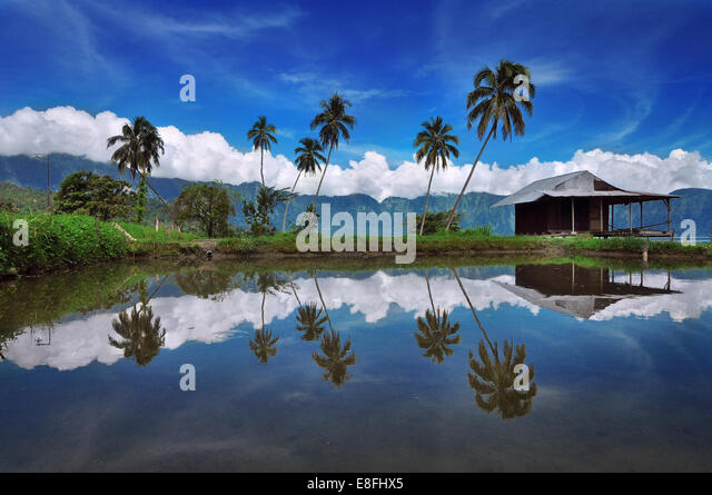 Indonesia, Padang, Maninjau Lake Area, Reflection of palm trees - Stock Image
