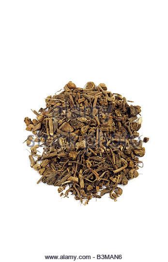 Valeriana officinalis - valerian root herb - Stock Image
