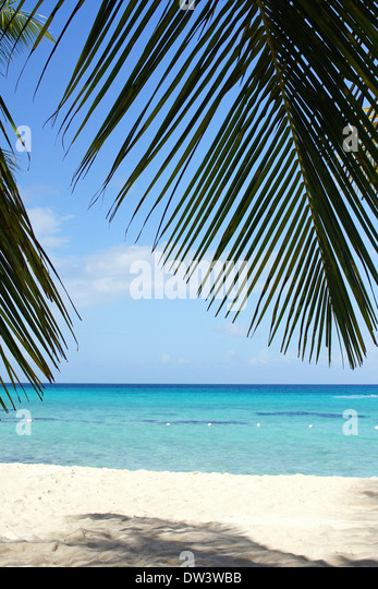 Caribbean Beach with palm trees, Dominican Republic, West Indies, Caribbean - Stock Image