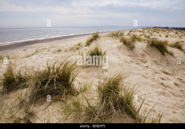 The beach and sand dunes, Walberswick, Suffolk, England - Stock Image