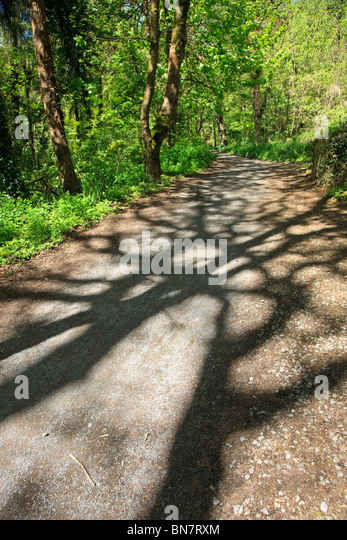Woodland walk with shadows of trees on path, leafy dappled light - Stock Image