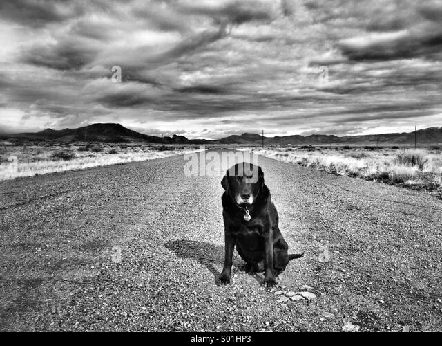 Dog road - Stock Image
