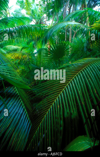 Dense tropical palms and vegetation in Belize Caribbean Property Released Image - Stock-Bilder