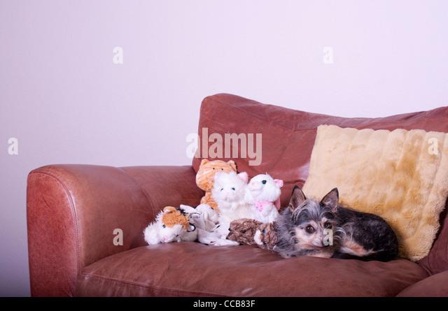 Cat And Dog Cafe Norfolk