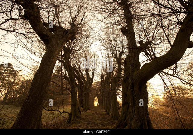 Monks' Trail at Gut Scheda, Wickede, Germany - Stock Image