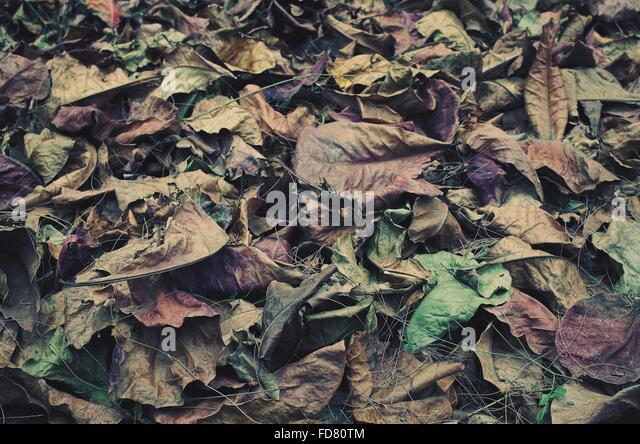 Full Frame Shot Of Autumn Leaves - Stock-Bilder