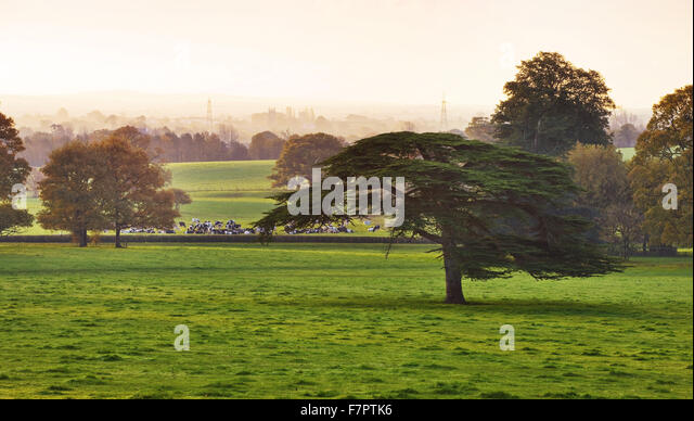 View across the parkland at Killerton, Devon, to the fields beyond. - Stock Image