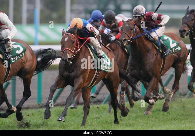 Hyogo, Japan. 1st Mar, 2015. (L-R) Daiwa Maggiore ( Mirco Demuro), Sudden Storm (Yusaku Kokubun) Horse Racing : - Stock Image