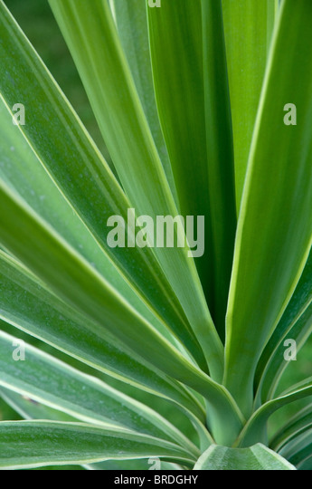 Green plant detail background, selective focus - Stock-Bilder