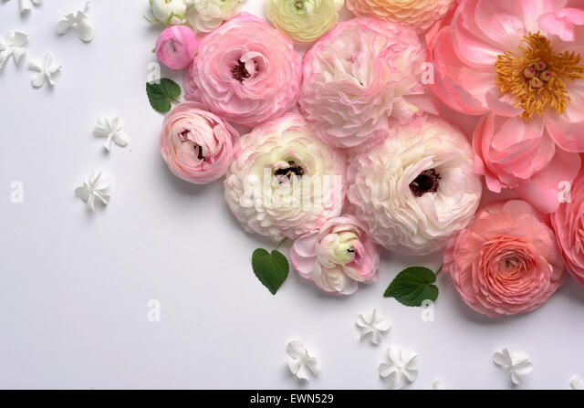 Overhead shot of ranunculus and peonies - Stock Image