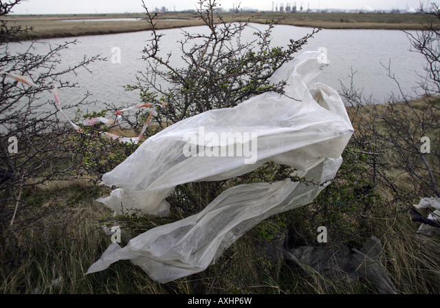 Plastic blown from a land fill site at Seal Sands near Middlesbrough Cleveland UK - Stock Image
